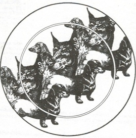 Dogbowls Design