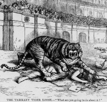 Tammany Tiger